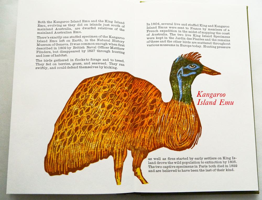 kangaroo island emu.jpg