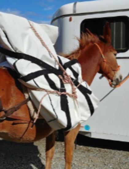 Horse Team