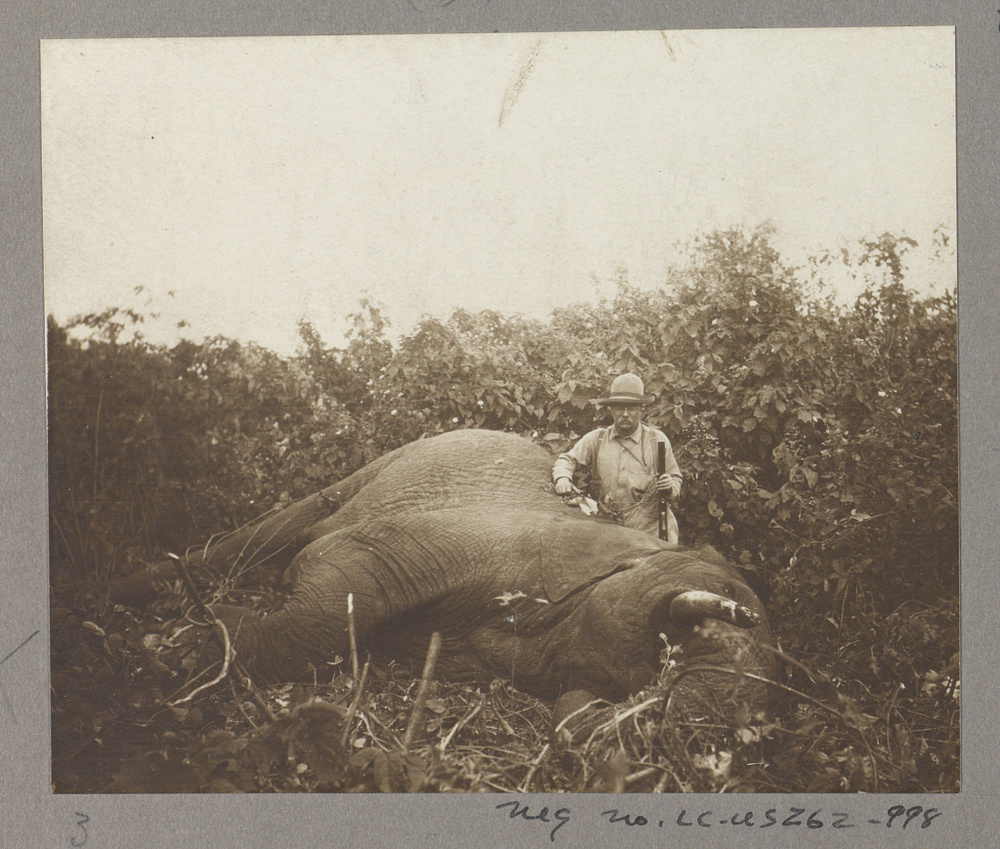 Roosevelt and a bull elephant