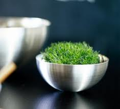 Modern Pot, Grass and Moss for draining.