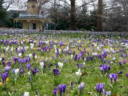 Historic Homes & Crocus Lawns