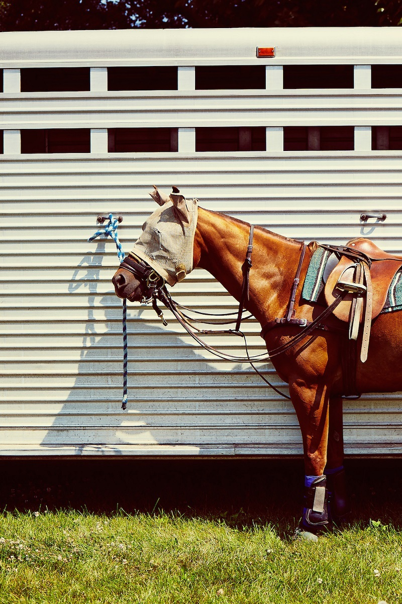Brown-saddled-horse.jpg