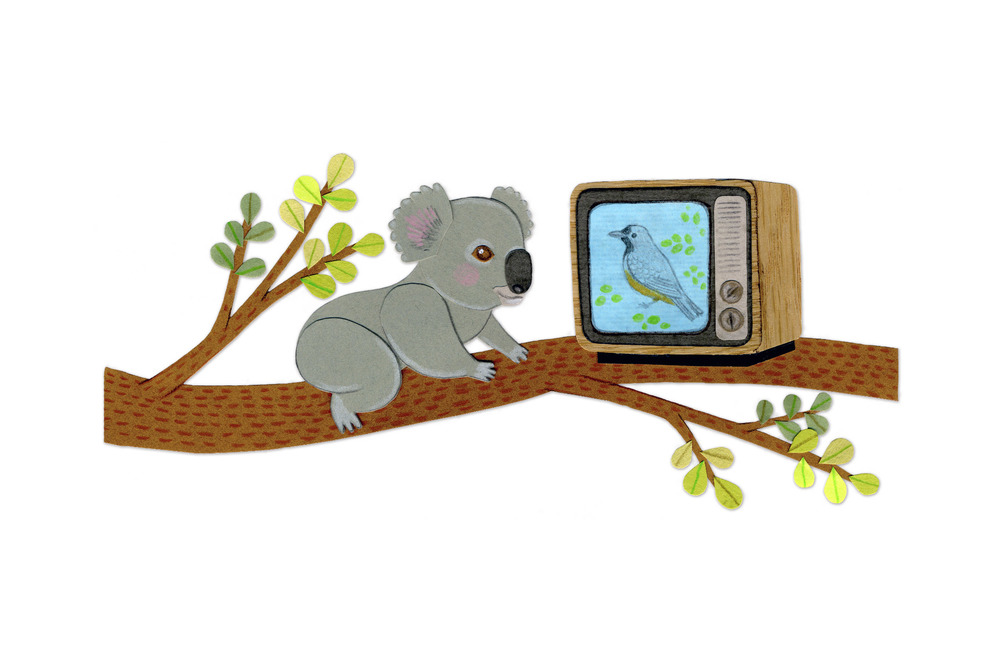 koala_branch_tv_illustration.jpg