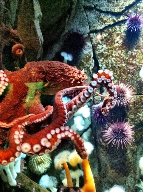 Ocean Discovery Center