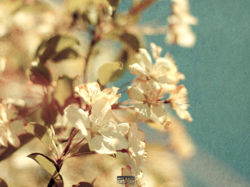 Fleurblanche-iPad