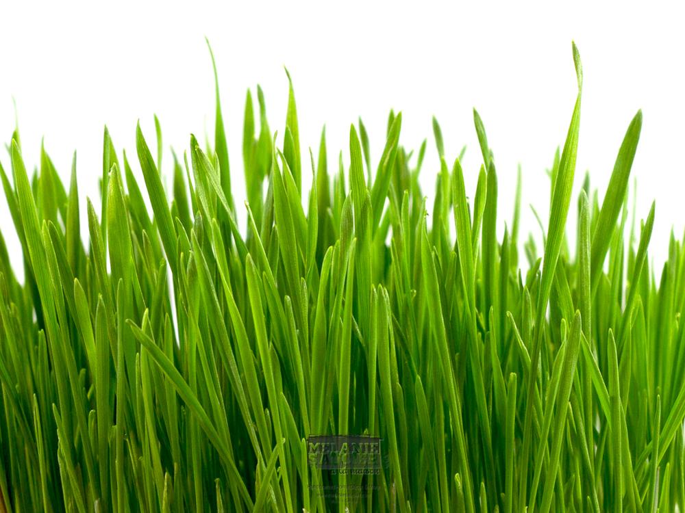 Grass_iPad