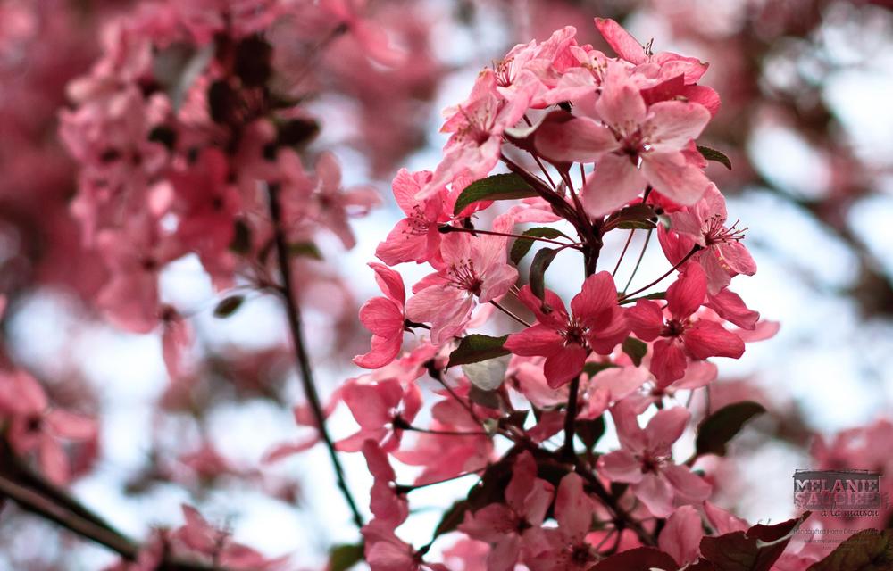 Blossom_1600x1024