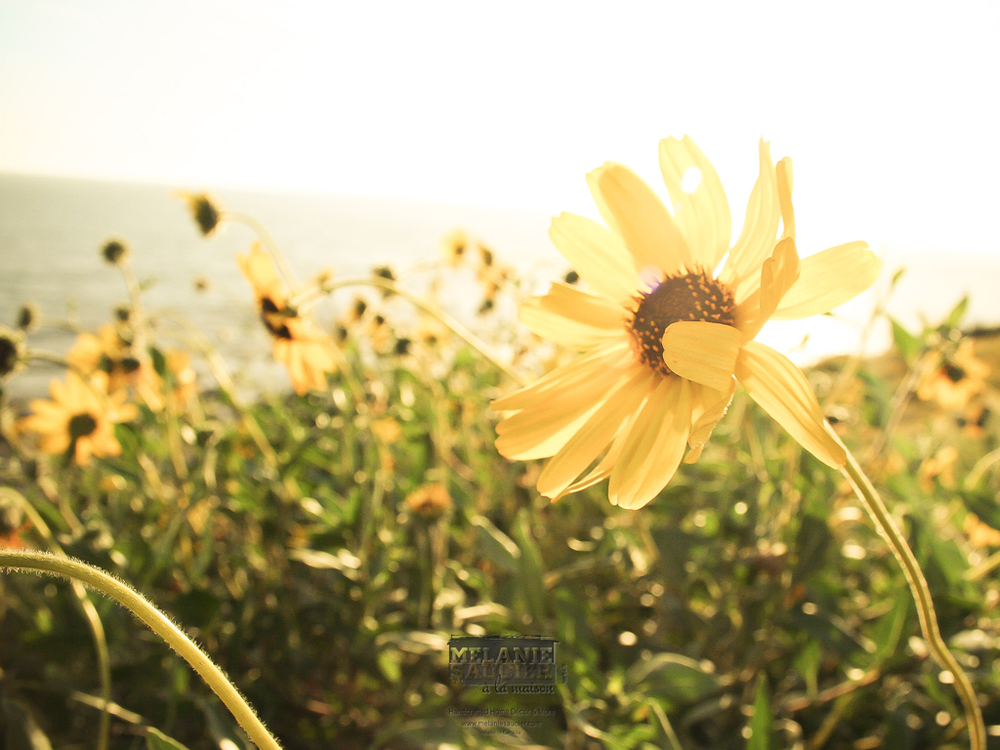 Yellowdaisy_iPad
