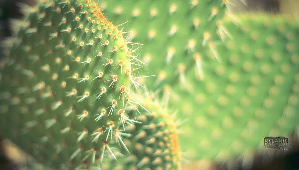 Cactus_1900x1080