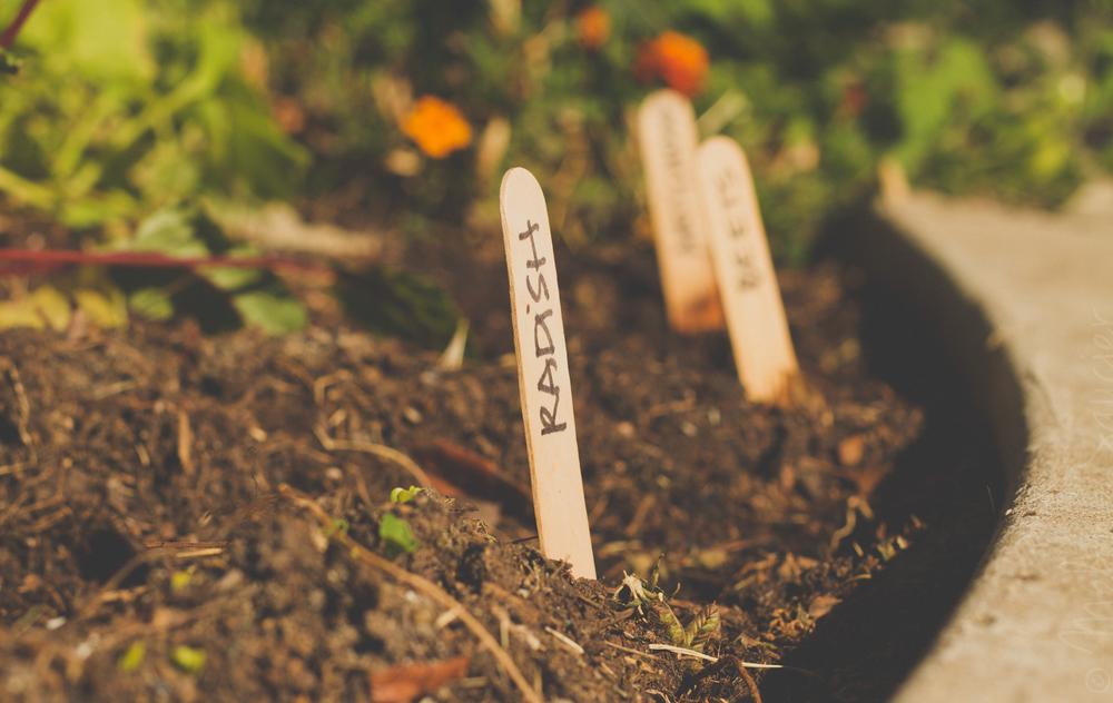 Garden_1900x1200-1
