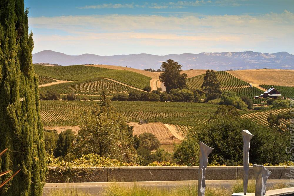 California Winery Artesa (16)