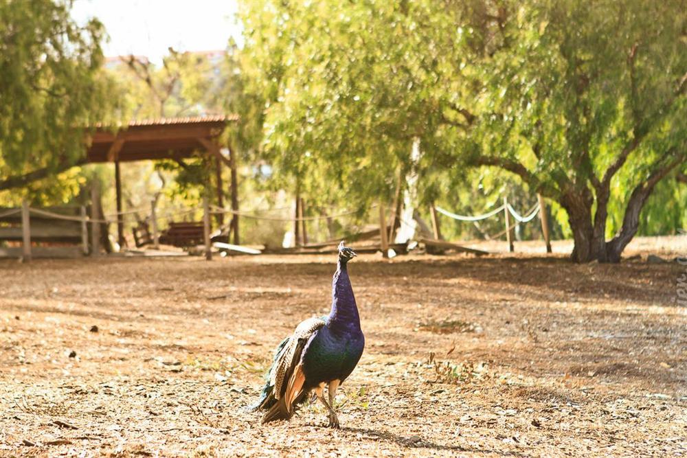 Carrillo_Ranch-2 (Medium).jpg