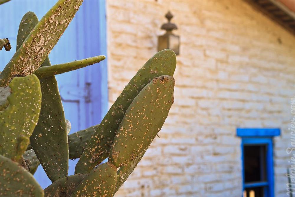 Carrillo_Ranch-8 (Medium).jpg