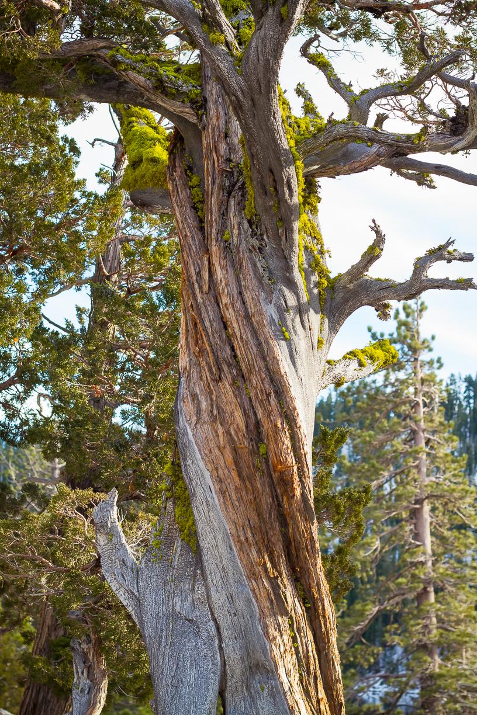 Echo_Lakes_Tahoe-27.jpg