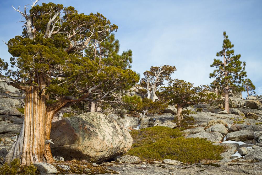 Pine, fir and aspen are the type of trees you'll find around Echo Lakes—Le pin, le sapin et le tremble sont les essences d'arbre que vous retrouverez autour des Echo Lakes.