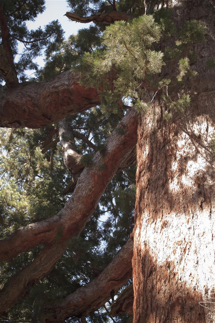 Yosemite (20).jpg