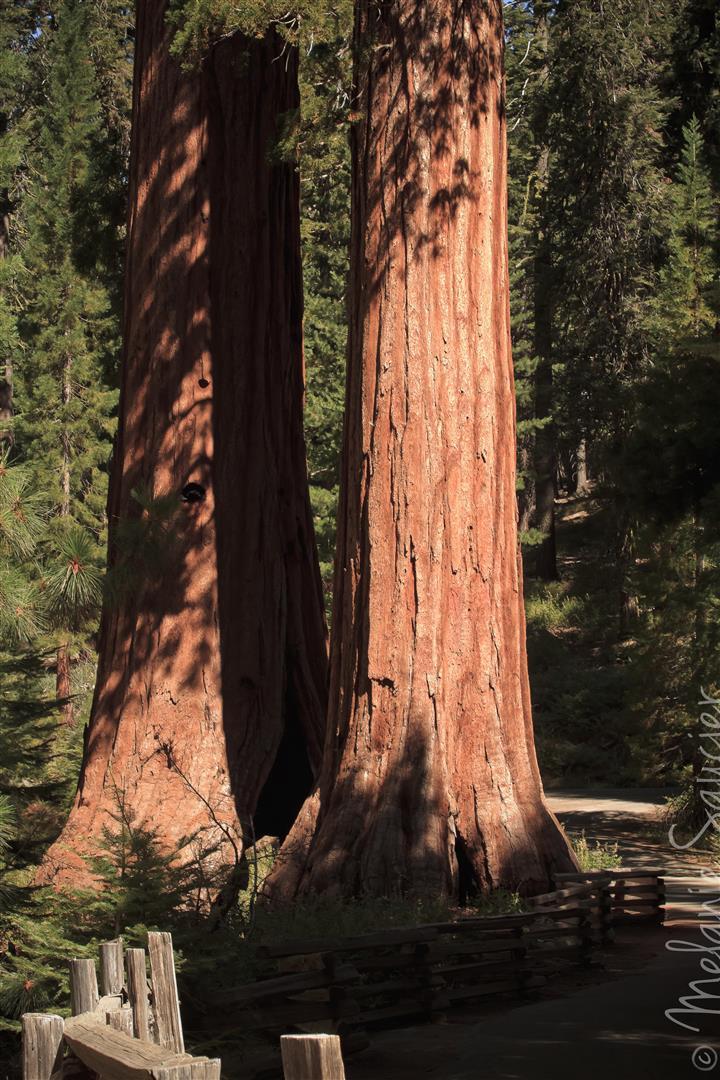 Yosemite (17).jpg