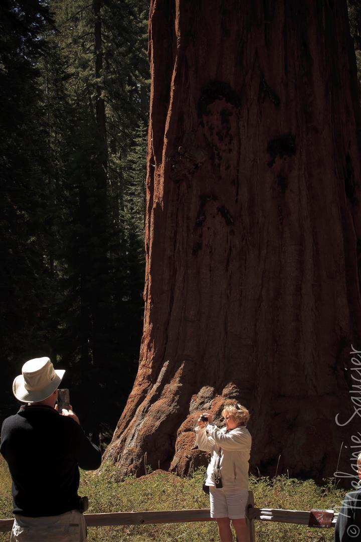 Yosemite (5).jpg