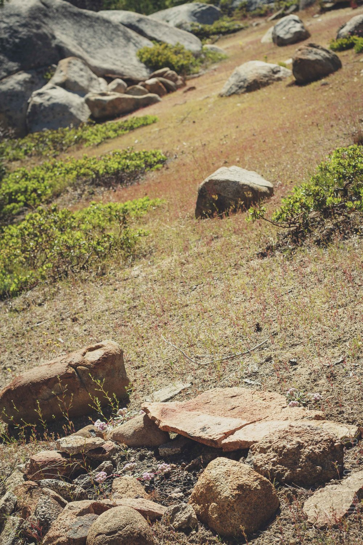 Utica_Reservoir_NorCal-77.jpg