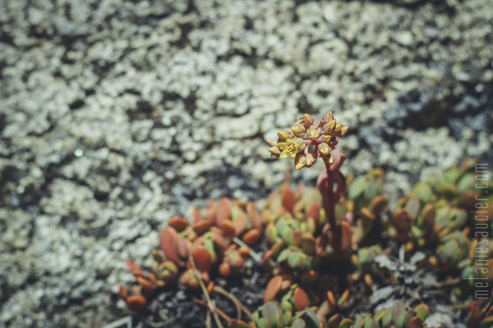 Utica_Reservoir_NorCal-29.jpg