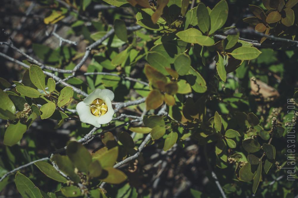 Utica_Reservoir_NorCal-39.jpg