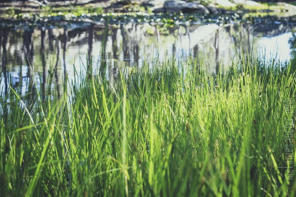Utica_Reservoir_NorCal-44.jpg