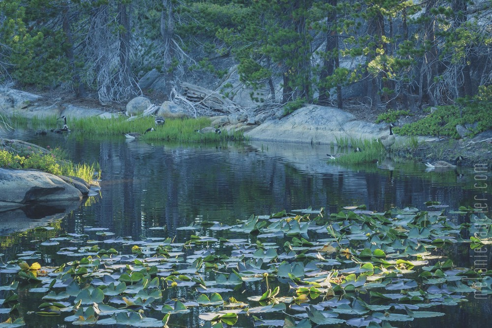 Utica_Reservoir_NorCal-89.jpg