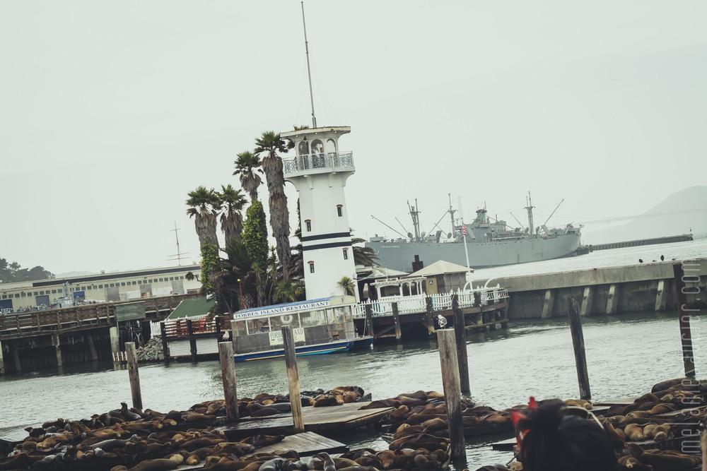 Alcatraz-6.jpg