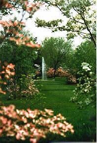 National Arboretum Dogwood Collection