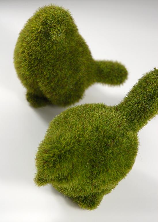 moss birds