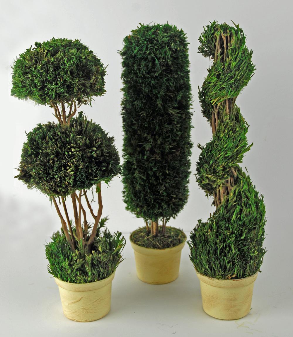 set of three preserved topiaries
