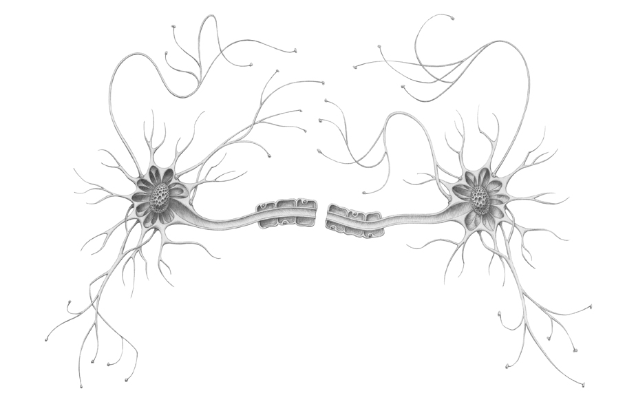 Neuron_Illustration_Ailsa_Burrows.jpg