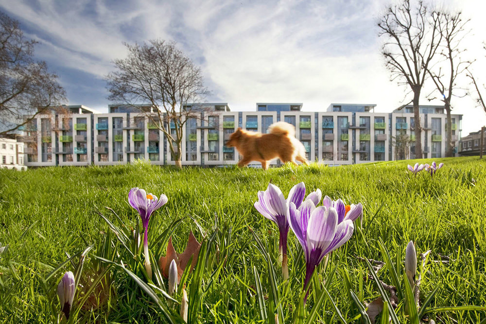 Arundel Square communal garden showing the apartment building and a dog running across the frame. This was photographed to highlight the green space just outside of the new build.