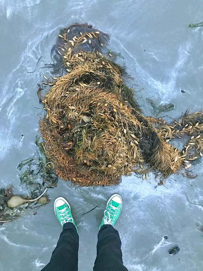 raddest seaweed