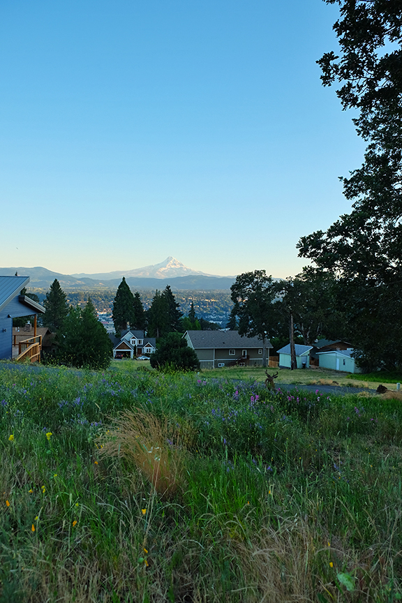 Mt. Hood from the Washington side