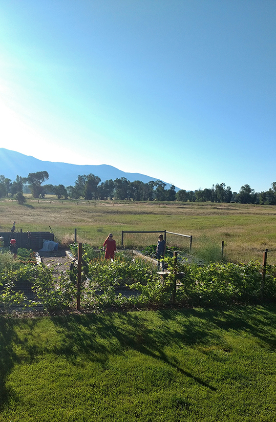 morning garden shot in Bozeman, MT