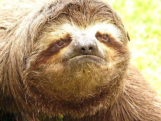 "Sad Sloth says, ""Please believe in me, Emily."""