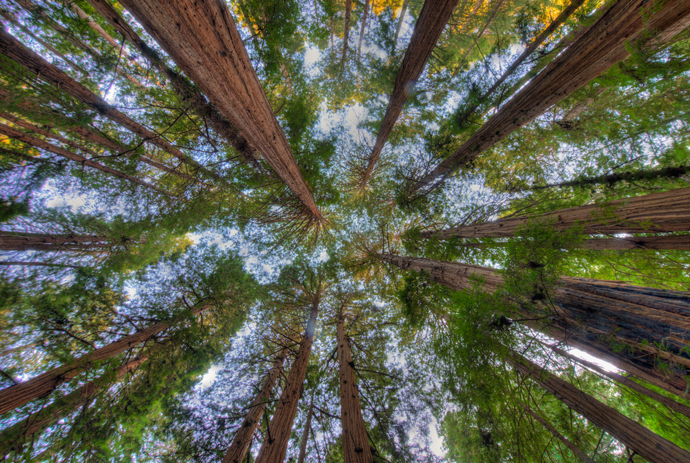 Adam Jacobs Photography_Redwood Forest.jpg