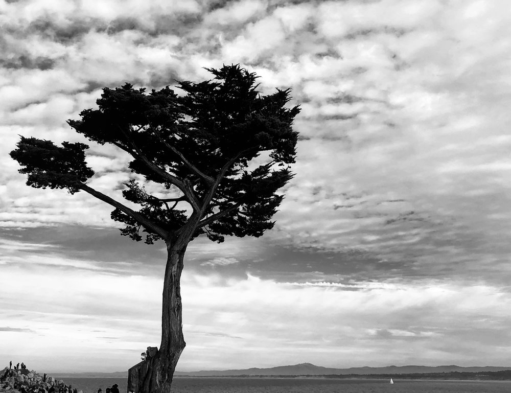 Adam Jacobs Landscape Black and White California IPhoneX Photo 5.JPG