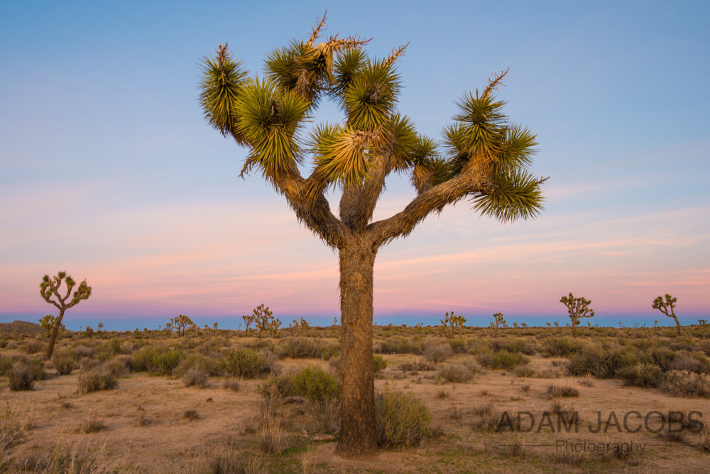 San Francisco Based Photographer Adam Jacobs Landscape Photography To Buy Joshua Tree National Park-7.jpg