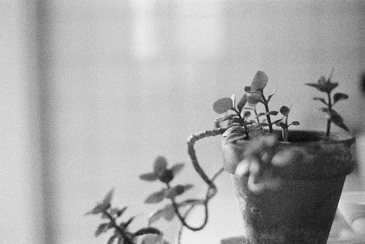 succulent copyright Katharine Peachey.jpg
