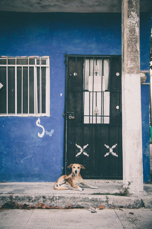 MP_16.04.08-13_Cancun Mexico-0729.jpg