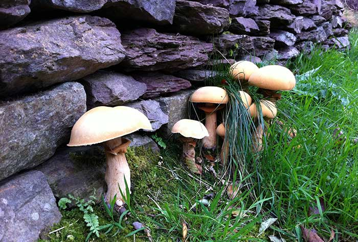 Toadstools standing leaning against walls | Cloudberry Lane