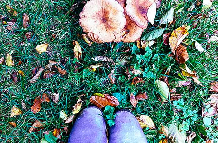Mushrooms and toadstools | Cloudberry Lane