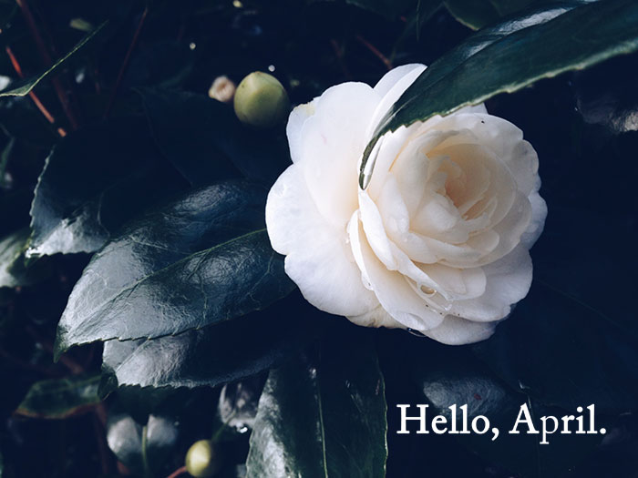 Hello, April 2014 | Cloudberry Lane