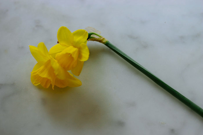 weekend-link-love-daffodil-golden.jpg