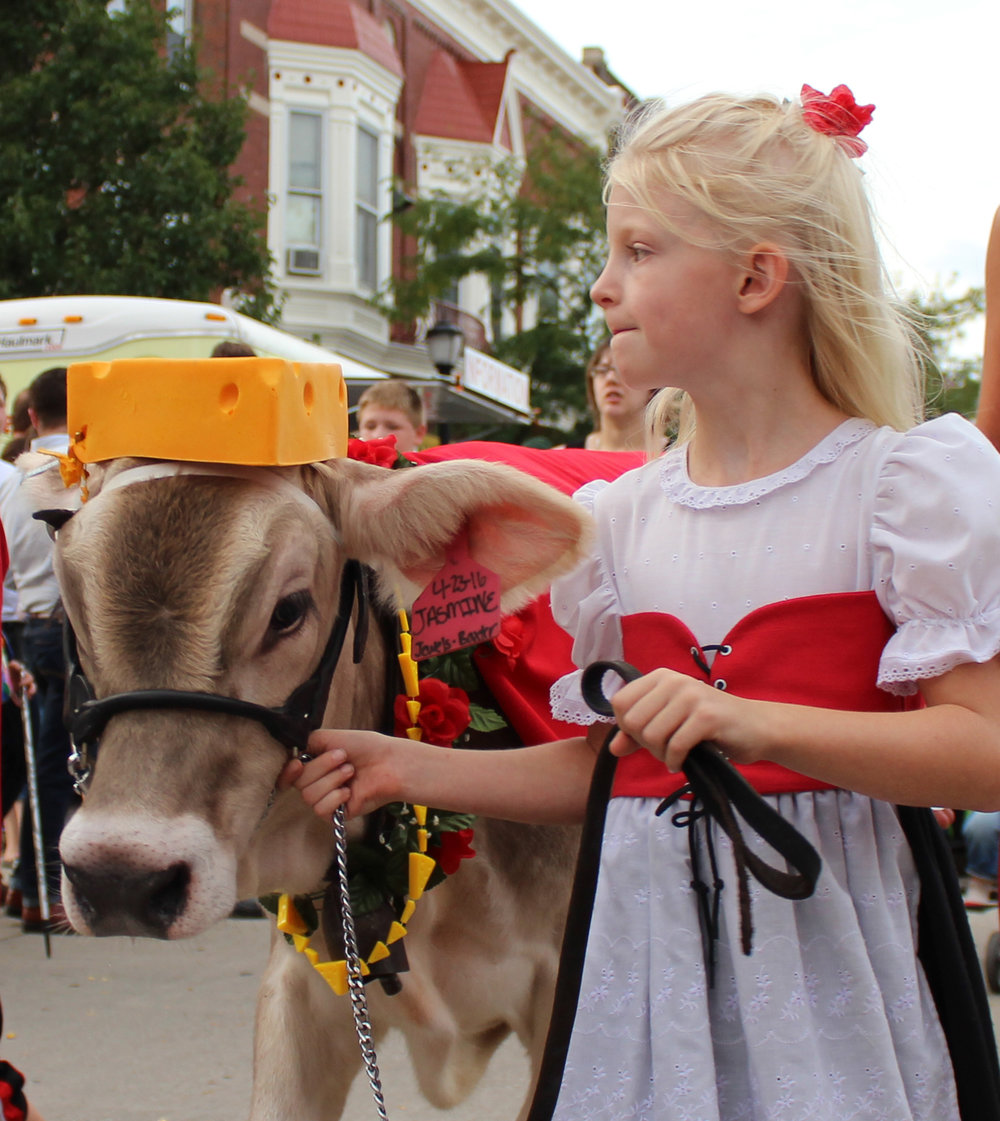 brown swiss wearing cheese hat and cheese beads.JPG