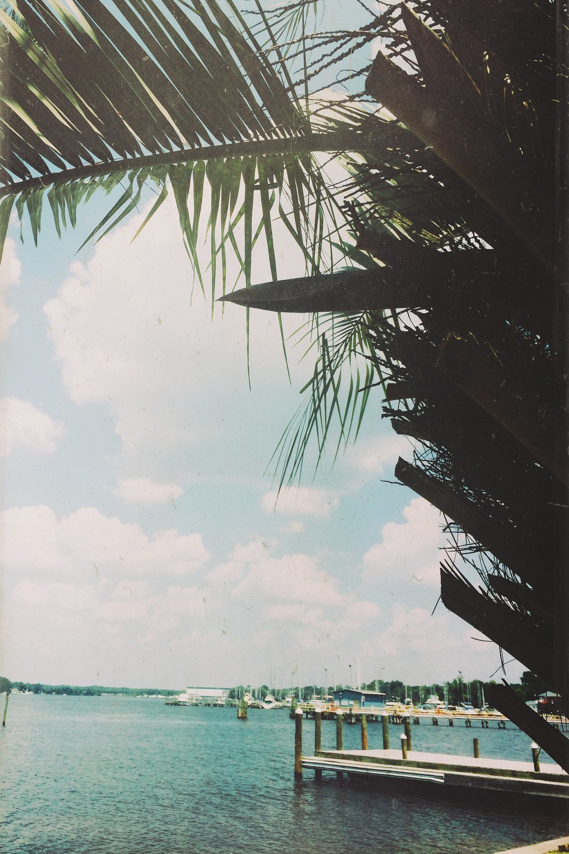 bayou1.JPG