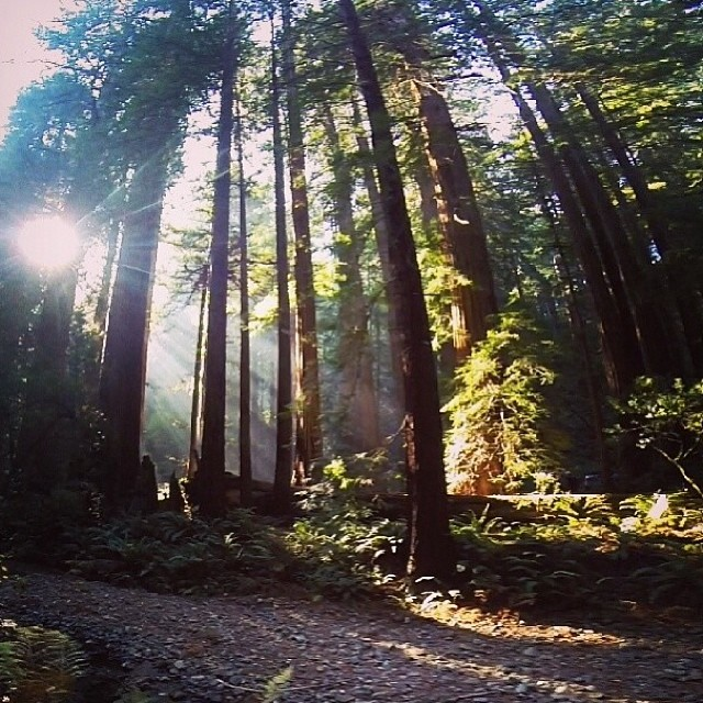 Muir Woods, Mill Valley, California | Happy Place of @canyoncopa | #adventure #bucketlist #cali #discover #forest #sunlight #greatoutdoors #gooutside #explore #free #happyplace #igtravel #potd #mountains #nature #naturegram #naturelover #outdoors #park #sky #travel #travelgram #traveladdict #wander #wanderlust