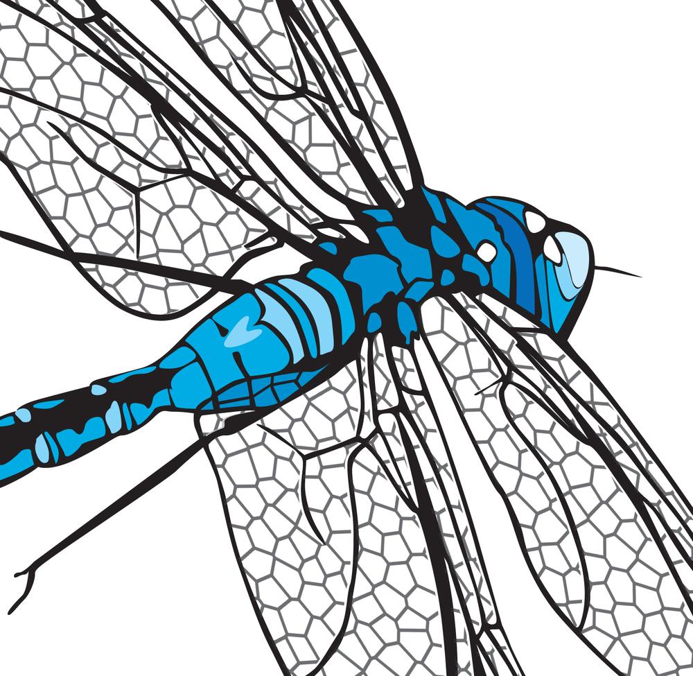 Dragonfly_Detail.jpg